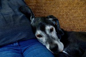 3 Ways To Show Support For Someone Who Is Grieving The Loss Of A Dog