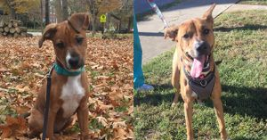 Woman's Surprise Reunion With Former Foster Dog Shows The Emotional Impact Of Fostering