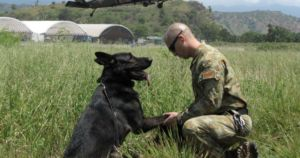 Retired Military Dogs Need Help Finding Forever Homes