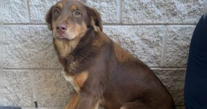Coffee Bean Lost Her Mom To Covid-19 And Needs Your Help
