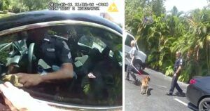 Police Officers Break Window To Save Dog Locked In 115 Degree Car