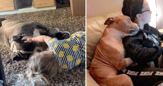 "15 Sweet Photos Of Pit Bulls That Contradict Their ""Aggressive"" Stereotype"