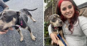 Dog Abused & Left To Starve In An Abandoned Attic Falls In Love With Her Rescuer