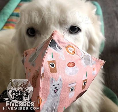 FiveSibes WaitingWednesday: Highlight on Husky Haven of Florida & Mask Fundraiser!