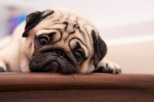 Dog Anxiety Causes & What Works