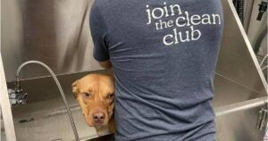 """""""Clean Start"""" Grooming Program Helps Adoptable Dogs Get Shiny & Healthy"""