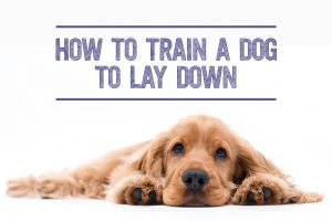 How to Train a Dog to Lay Down