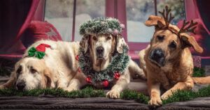 The Ultimate 2021 iHeartDogs Holiday Gift Guide