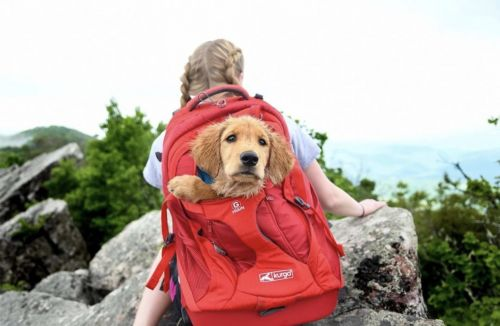 6 Necessities Your Dog Shouldn't Hike Without
