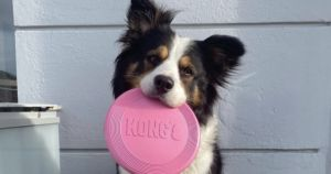 """Several """"Genius Dogs"""" Learn Names Of New Toys In Record Times"""