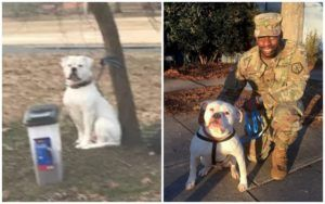 UPDATE: Dog Abandoned With Sign, Food, And Favorite Toy Gets A New Home