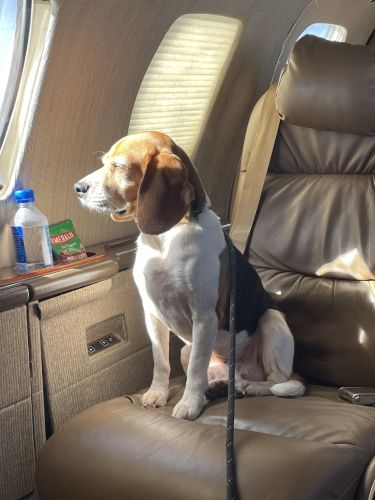 Meet The Dogs Trained To Sniff Out COVID-19 At Airports, Concerts, & Offices