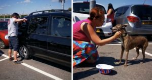 Shoppers Smash Car Window To Rescue Dog From Heat