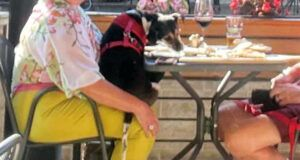 Woman Reports Dog Eating Off Plate At Restaurant To Health Department