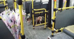 Bus Driver Breaks Rules To Save Stray Dogs From Storm