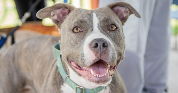 Texas Committee Passes Bill To End Breed Discrimination In Public Housing