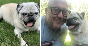 Must Read: Andrew Zimmern Posts Emotional Tribute For Pretzel, His Late Pug