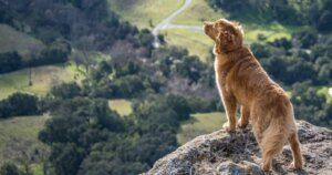 Study Claims Dogs Might Be Better Than A Compass