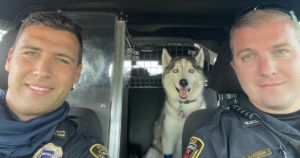 Husky Rescued From Hot Car After His Human Dies In Shooting