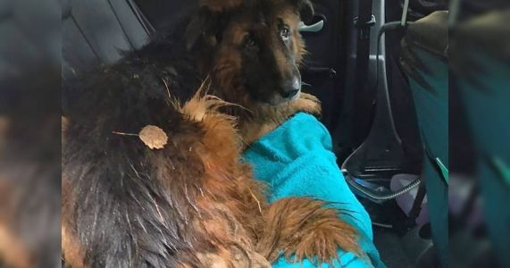 Couple Attempts To Bury Their Dog Alive But He Survives