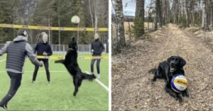 Dog Becomes Professional Volleyball Player During Quarantine