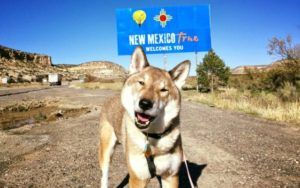 Man Takes Terminally Ill Dog On Cross-Country Road Trip To Visit Her Birthplace