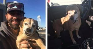 Selfless Man Drives Over 1,000 Miles To Reunite A Terminal Ill Woman With Her Dog