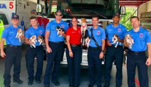 Pregnant Dog Wanders Into Fire Station, Delivers Puppies, & Finds A Forever Home!