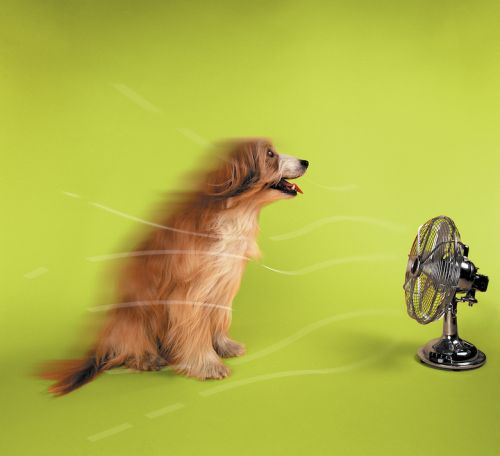 Why Do Dogs Have a Higher Body Temperature?