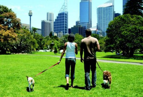 Survival Tips to Canine City Life