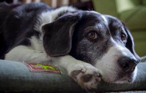 Is Your Dog Trying To Communicate With You?