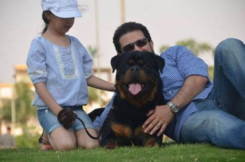 9 Signs You Love Your Rottweiler More Than Your Friends