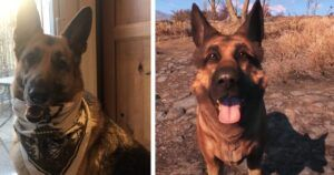 River, The Dog Who Inspired A 'Fallout 4' Game Character, Passes Away