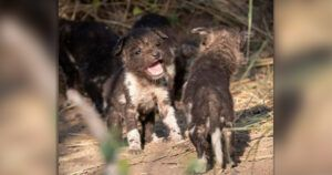 Endangered Pups Spotted On Reserve For First Time In Over 10 Years