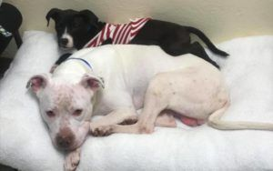 Puppy & His Older Pal Hope To Find A Home To Spend The Holidays Together