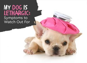 My Dog is Lethargic and Not Himself: Unusual Dog Illness Symptoms to Watch out For