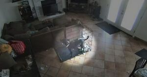 """Chilling Camera Footage Captures A """"Ghost"""" Removing A Dog's Collar"""
