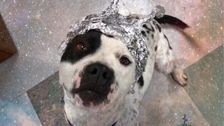Animal Shelter To Area 51 Enthusiasts: Come Raid Us!