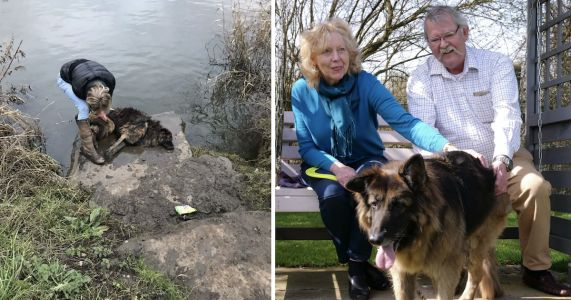 Senior Dog Tied To A Rock & Left To Drown Finds A Loving Home