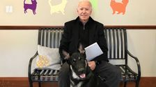 New Era Of Presidential Canines