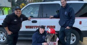 Great Dane Survives 60-Foot Fall & 48 Hours In The Wilderness