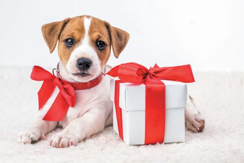 Holidays and Dogs: Keep Your Pup Happy at Every Age