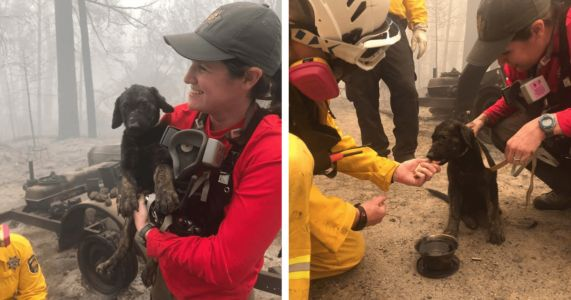 """Meet """"Trooper,"""" The Puppy Pulled From Wildfire Rubble"""