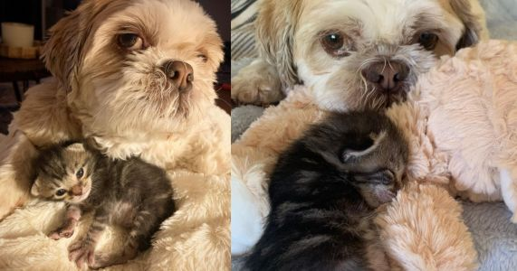 Moon The Dog Beams Love & Support On 3-Pawed Kitten Peg