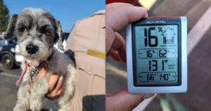 Tiny Puppy Rescued From Hot Car With Seconds To Spare