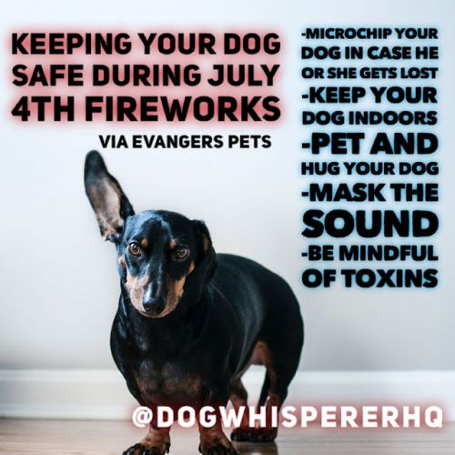 How To Prepare Your Pets for Fireworks: Evanger's Safety Tips for the 4th of July