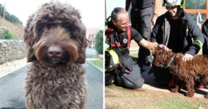 Digby The Trauma Therapy Dog Helped Save A Woman From Taking Her Own Life