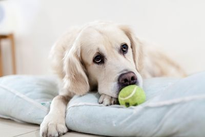 Top Veterinary Articles of the Week: Heartworm, Aspergillosis, and Colorado Protocol for Canine Parvovirus?