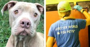 Nashville Animal Shelter Gets A Makeover Thanks To Your Donations
