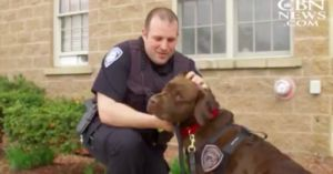 Generous Couple Donates Therapy Dogs to Serve with First Responders